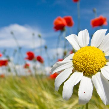 Festa di Primavera – Domenica 25 maggio 2014
