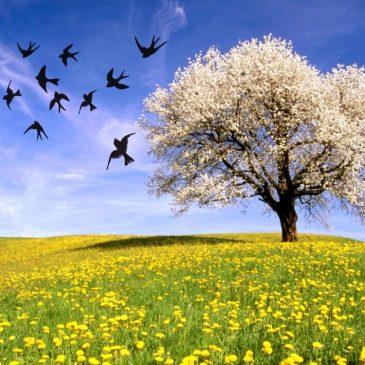 Festa di Primavera – Domenica 15 maggio 2016